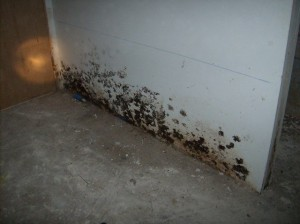 The Aftermath Of A Sewage Spill In A Basement