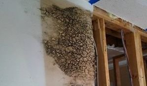 Mold Growth On Wall From Unmitigated Water Damage